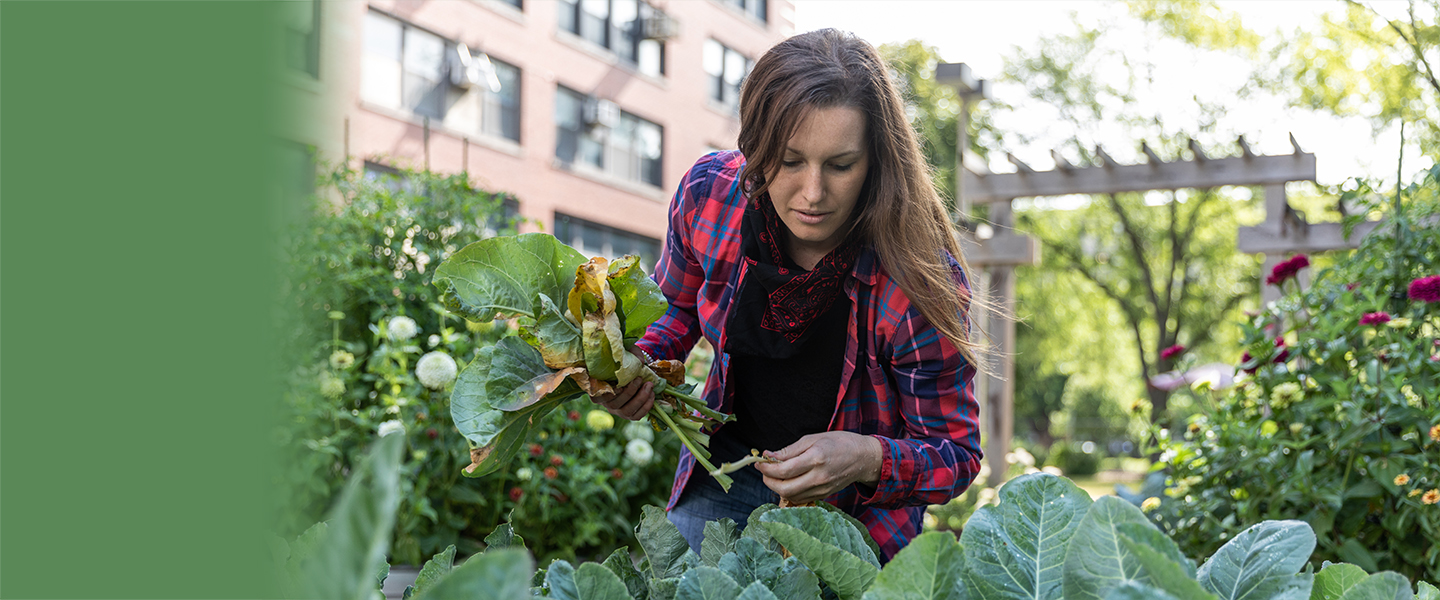 Woman in an urban garden picking leaves